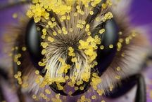 Nature // Bees - Bumblebees