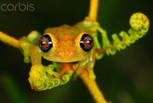 Nature // Herpetology and Entomology