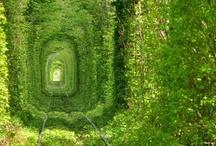 HOME SPACE |:| Secret Garden