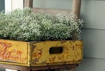 Baby's Breath Galore! / All the ways one can use baby's breathe at a wedding or event!
