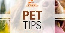 Pet Tips / Pet advice, recipes for homemade pet treats, and everything you need to keep your furbabies happy and healthy!