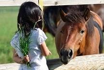 Horses / by Sylvia Smith