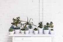 Succulents / Plants / by Jacquelyn Son