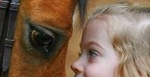 Horse Whispers / Equines in all their glory from miniatures to ponies to drafts