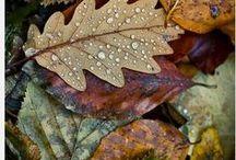 Herbst / Autmn / Verschiedene Momentaufnahmen aus dem Garten im Herbst: eine Lichtstimmung im Grünen, der Schnappschuss eines Gartenbewohners, verfärbte Blätter, eine Spiegelung auf dem Schwimmteich-Wasser...