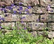 Trockenmauern / Drystonewalls / Trockenmauern als Gestaltungselement und ökologische Nische in Naturgärten. Angabe zur Gesteinsart, Art des Verbandes und Fugenklasse