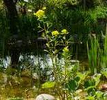 Zierweiher Biotope / Ponds Biotope / Kleine, künstlich angelegte Stillgewässer - naturbelassen, strukturreich und belebt. Ideal zur Beobachtung artenreicher Lebensräume
