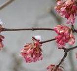 Winter im Naturgarten / Winter natural garden / Schnee, Eis, verwelkte Blütenstände... Momentaufnahmen in der kalten Jahreszeit
