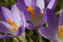 Frühling / Spring / Erste frische Sprossen, bunte Frühblüher, dezente Sonnenstrahlen....