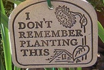 Gardening / Planting, maintaining, fertilizing, composting how to's and tips. / by Judy Fazio