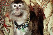 Animal Instinct / by Charm & Chain Jewelry