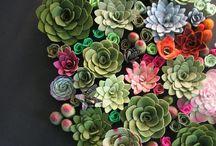 TUIN / Succulents
