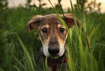 I am a dog person. / by Lyndsay Stradtner