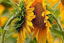 Gardening - Jardiner / by Denise Leger