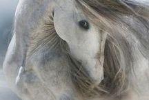 Magnificent Horses