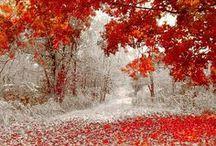 Beautiful scenes / by Rachel Sawyer