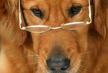 Dogs / by Eva-Marie Howard