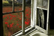 Abandoned and Forgotten ......