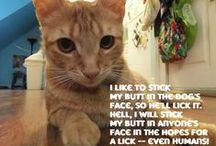 Cat Shaming / by Brandi Bartlett