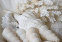 Wonderful White