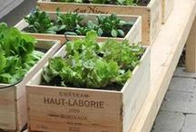 ❧ gardening ❧ / Tips for healthy gardens and beautiful outdoor life.