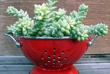 GARDEN IDEAS / IDEAS FOR GARDENS AND OUTDOOR PROJECTS...