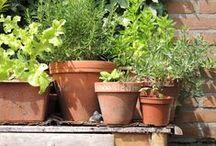 garden - tuinieren