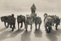 Dogs / by Christopher Dawe