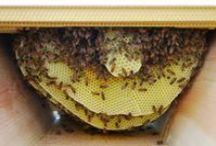 bees & honey.