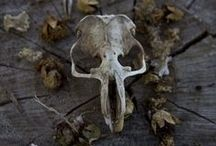 Bones and withered plants / Beauty of decay