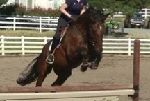 Cowgirl up (or, I confess I'm a horse nerd) / Horses. They are addicting.