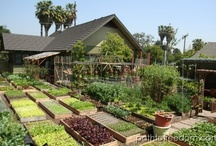 Homestead / I'm collecting here some pictures/links about self-sufficiency and alternative ways to cultivate or create a garden. For me homestead-to-be...