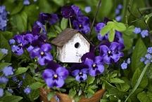 In The Garden / by Linda Hunt