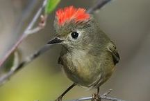 Beautiful Birds / by Linda Hunt