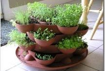 Indoor Herb Gardening / There are SO many great uses for herbs. And there's nothing better than having your very own herb garden right in your backyard.  Check out these great herb garden ideas.