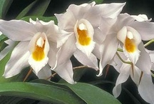 Orchids & Orchid Care / by Rose Sniatowski