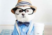 Dogs, Puppies and Pooches / A collection of cute dogs for every dog lover!