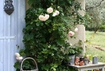Drømme hagen.