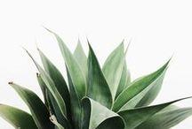 >>> greens / by Katie Hinkle // Sloan + Tommy