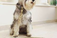 Dog Collars & Leads / Great modern dog-themed product finds for dog lovers everywhere - collars and leashes.