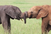 Elephants V2 / by Monika Freidel