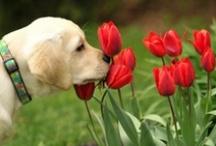 Just plain cute!  (Dogs) / by Karen Lazzaro