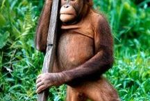 Monos, micos, primates y demás...