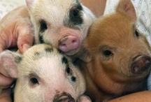 Oink,oink,Piggy