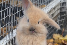 Bunny/Rabbit
