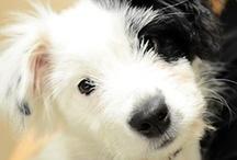Dog & Cat Health / by Brenda Fowkes