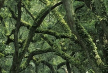 Amelia Island and Environs / by Mary Anne H