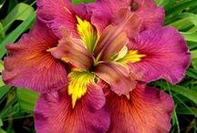 Flores-Loreak