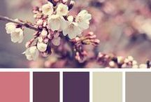 Color Inspiration / by Beth Stewart