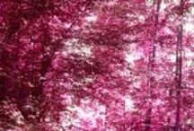 Pink In Nature